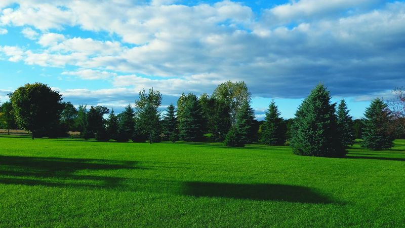 Treescape. Copyright© Trees TreePorn Landscape Nature Vintagefilter V2filter