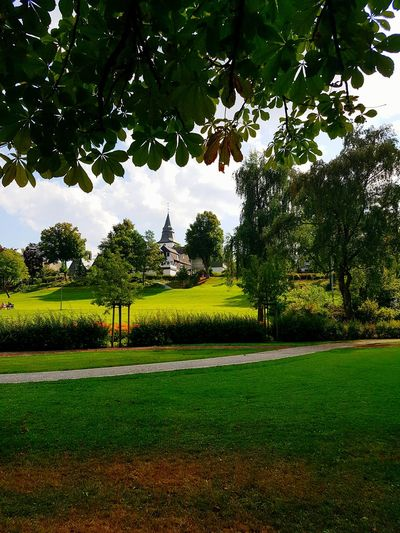 Picoftheday Winterberg Tree Green Kurpark  Summerday Out For A Walk Beauty In Nature Landscape Outdoors Nature Check This Out Flowers September 2016 Saturday Sun Sky