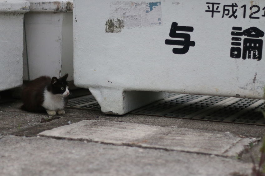 Cat Feral Cat Travel Isolated Yoron Yoronisland Oyamaneko 猫 ねこ 野良猫 与論島 離島 島巡り 旅