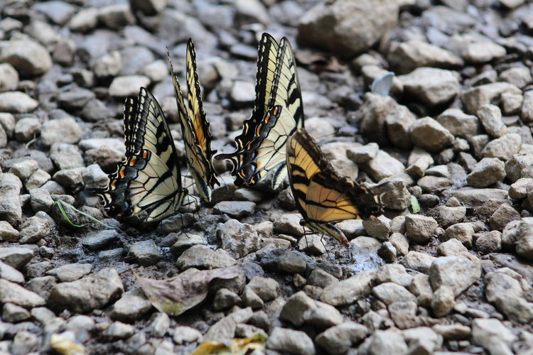 High angle view of butterflies on stones