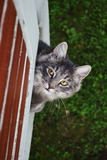 Cat Taking Photos Hello World Mycat♥ Staring Portrait Pets Outdoors Nature Feline Domestic Cat Animal Head