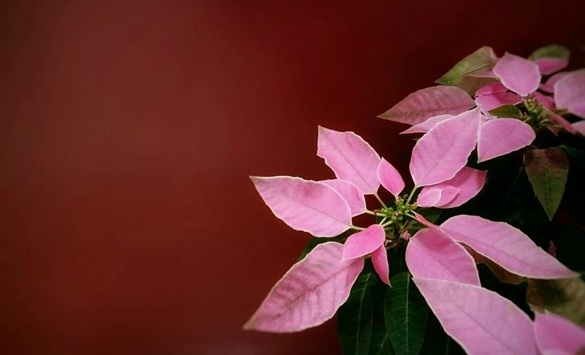 Flowers My Hometown Streetphotography December 2015