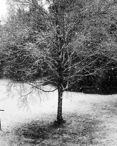 Winterwonderland Winterfun Snow Pictureoftheday Photographie  White Cold Instalike Austria Blackandwhite Photooftheday Trees Nature Steyr