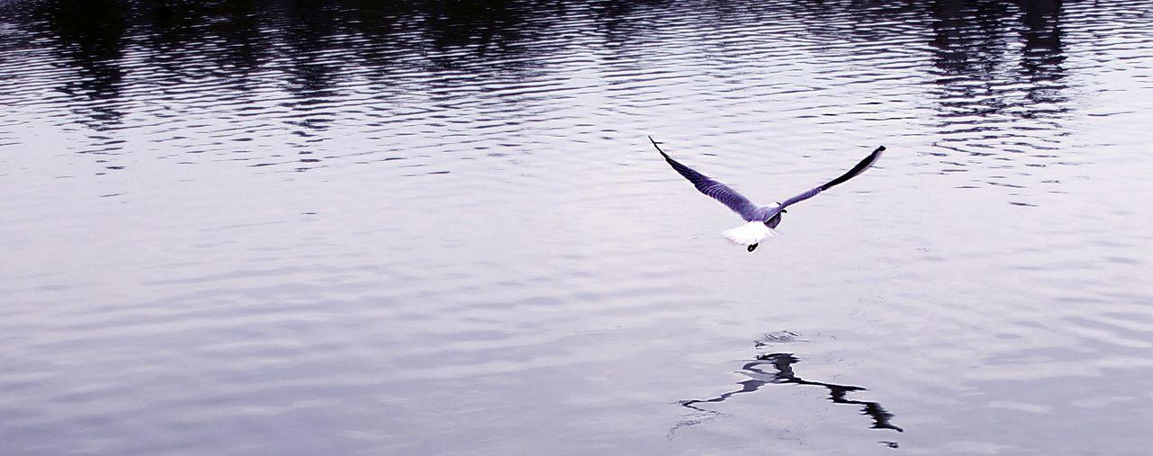 Water Reflection Lake Vertebrate Animal Wildlife Animals In The Wild Animal Themes Animal Bird Nature Outdoors