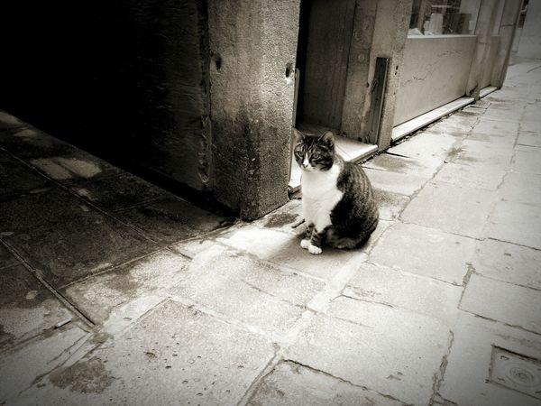 Veneza Venice Venezia Cat Cats Italy Italia Venezia Italia Animals Catsoftheworld Viewfromthestreet Italy❤️ Europe Italian Italy Photos Cats & Dogs Cats&dogs