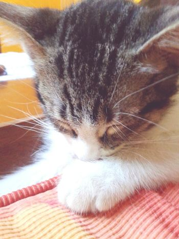 MyLittleCat 💕 🐱 Cute♡ Sleepy Time