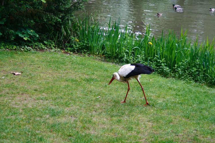 Bird on a grass