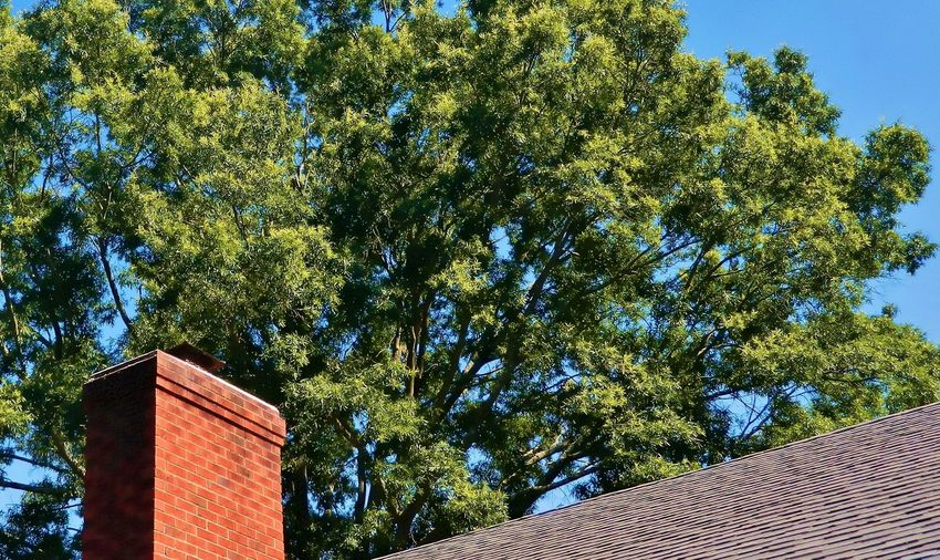 Santa's Way In Blue Brick Chimney Clear Sky Close Up Day Daylight Green Green Color Image Of Low Angle View Lush Foliage No People Outdoors Photo Of Picture Of Rof Top Roof Sky Sunny Tight Shot Of Time Tree Tree Branches Up Close