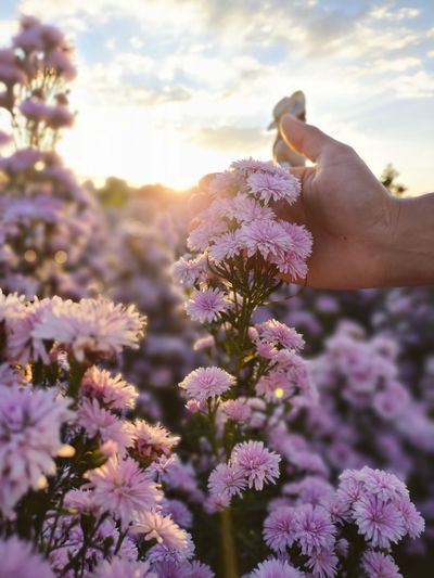 Close-up of hand holding purple flowering plants against sky