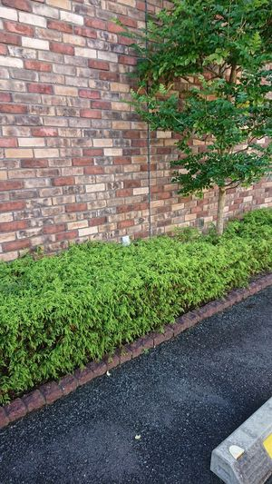 レンガの壁と垣根 Tree
