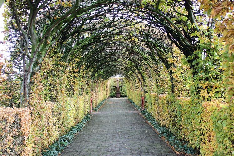 Muiderslot Architecture Autumn Beauty In Nature Day Growth Leaf Nature No People Outdoors Plant The Way Forward Tree Walkway