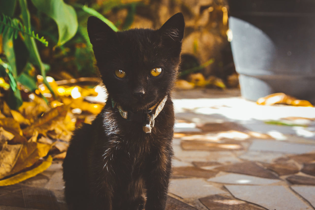domestic cat, one animal, animal themes, pets, domestic animals, feline, mammal, portrait, looking at camera, no people, leaf, focus on foreground, day, sunlight, outdoors, sitting, close-up, nature