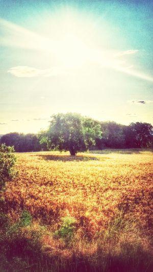 Movileando Por El Mundo Tree And Sky En El Campo