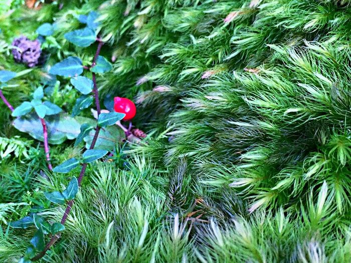 Japan Hanging Out Fukui Moss