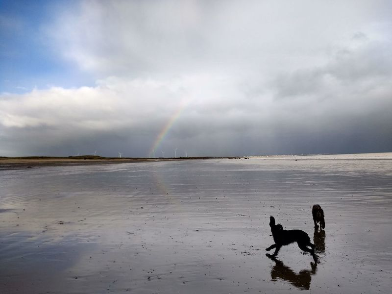 Silhouette Water Beach Outdoors Rainbow Beauty In Nature Cocker Spaniels East Coast Yorkshire Barmston Beach Dogslife Dogs Playing  Dogs Playing Together
