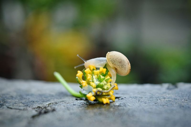 Surface Level View Of Snail On Fallen Flower