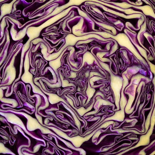 Purple river Abstract Cabbage Close-up Freshness Full Frame Healthy Eating No People Paterns In Nature Pattern Purple Red Kraut Vegetable