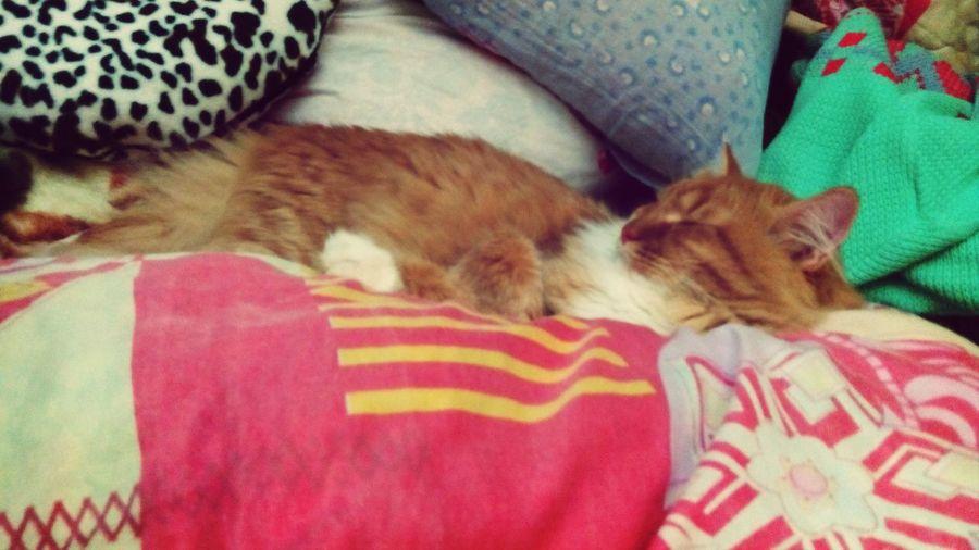 А когда то я не любил котов..))
