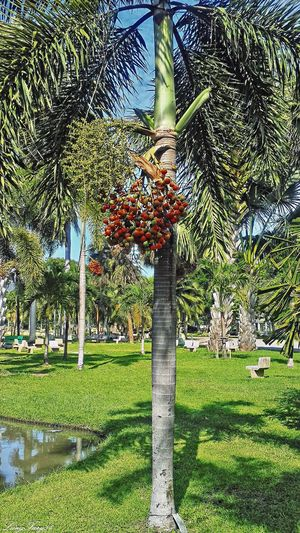 Lumpini Park Bangkok Beauty In Nature Growing Lumpini Park Nature Outdoors Park Plant Thailand Tranquil Scene Tree