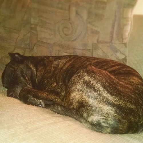 Tankers had a RoughDay Tiredpuppy Brendle Pitbull sleepy Sunday