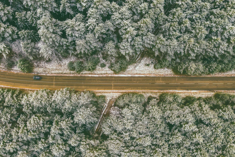 High angle view of road amidst trees growing in forest during winter