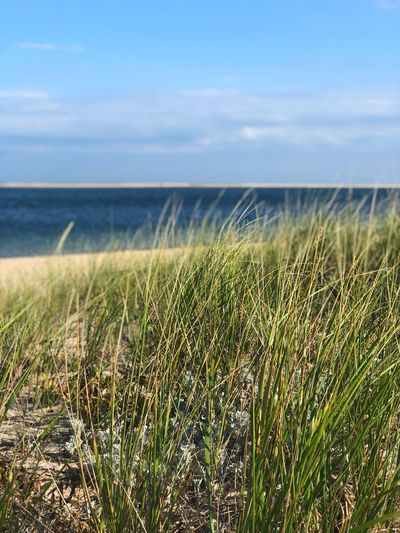 Plant Sea Beauty In Nature Sky Water Growth Tranquility Grass Outdoors Beach Sunlight Cloud - Sky Nature Scenics - Nature