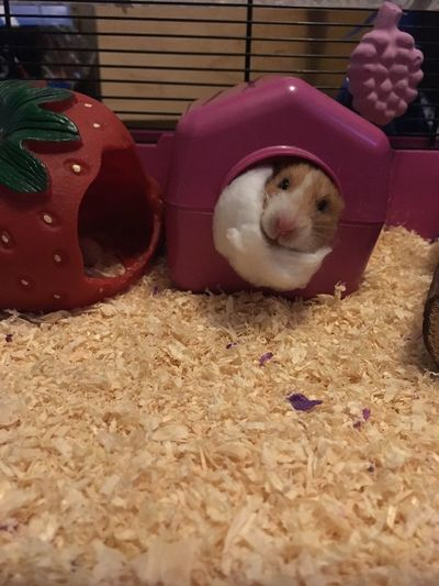 Hamster Cute Cage Funny