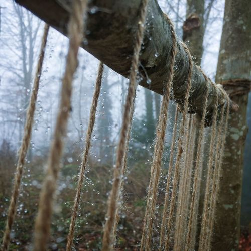 Drops Morning Close-up Focus On Foreground Fog Forest Hanging Nature Outdoors Rope Selective Focus Tree Water Wood - Material