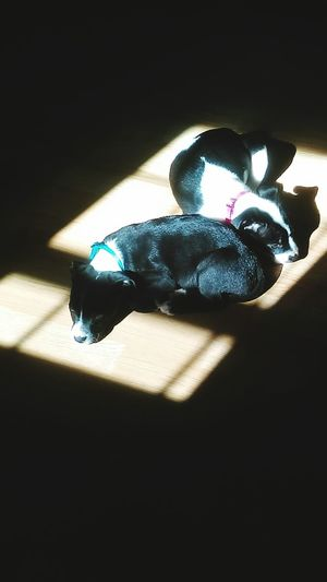 Indoors  No People Illuminated Day Sun Coming Through Window Sun Domestic Animals Pets Sun Light Puppies Puppies Sleeping ;)
