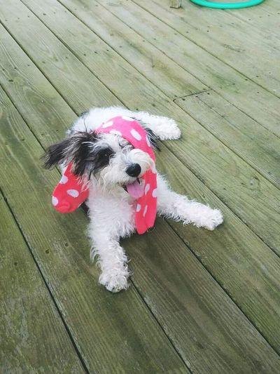 Pets Dog Cute Portrait