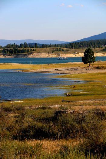 #koocanusalake Yyc Calgary Alberta Canada Canada Koocanusa Camping Roadtrip Flamingo Water Lake Sky Landscape Grass