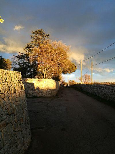Day Outdoors Tree Sunlight Tramonti__italiani Huawei P 9