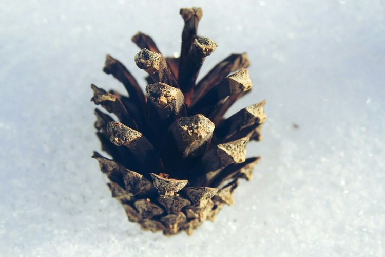 Close-Up Of Pine Cone On Sunny Day