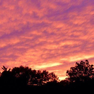 Sundown yesterday evening 💖 Sky Tree Cloud - Sky Silhouette Sunset Beauty In Nature Idyllic Dramatic Sky Scenics - Nature Low Angle View