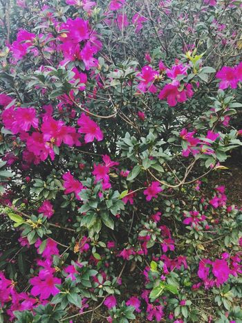 Beauty In Nature Nature Plant Flower Flower Head Pink Color Green Color Green Pink Flowers Beautiful Day Nature Tranquil Scene