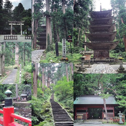 秋田山形日記 DAY 5 羽黒山 スタジオセディックで映画のなかの大自然を散策したあとは、さらに大自然の山を散策です⛰🚶🏻💨 山形の名山【羽黒山】に行きました⛰🚗💨 立派な鳥居から、長く続く下りの階段をひたすら歩きます🚶🏻💨💨 下り階段でも、山道の階段はかなりの急斜面で少し怖かったです😨 観光客の方々が赤い橋の奥のほうを撮っていたので、わたしも何か分からず撮っておきました。笑😚📱✨ けっこう山奥まで歩いてきて、目の前に見えてきたのは天然記念物『爺杉』です👴🏼🌲✨ まだまだ歩きます🚶🏻💨💨 そして、ようやくたどり着いた目的地、国宝『羽黒山五重塔』です🙏🏼✨ 間近で見る初めての五重塔は、圧倒的な迫力で、とても神聖な雰囲気と佇まいがすばらしかったです🙏🏼✨✨ 五重塔のまわりをぐるりまわって、過酷の帰り道です。笑 下りの階段が急斜面だったので、もちろん上りは…😵💦 乳酸が溜まりに溜まってしまいました。笑💀💦 日頃の運動不足を呪う。笑😭 でも、上に続く階段の写真は、なんだか好きです😊👍🏼 羽黒山は時間が無くてサクッとしか見れなかったけど、一度は行きたかったから、いい思い出になりました😚✨ 雨も降らず、行けてよかった!😉👍🏼 つづく。 秋田山形日記 山形 鶴岡市 羽黒山 山 山道 天然記念物 爺杉 国宝 羽黒山五重塔 旅行記 旅行 旅