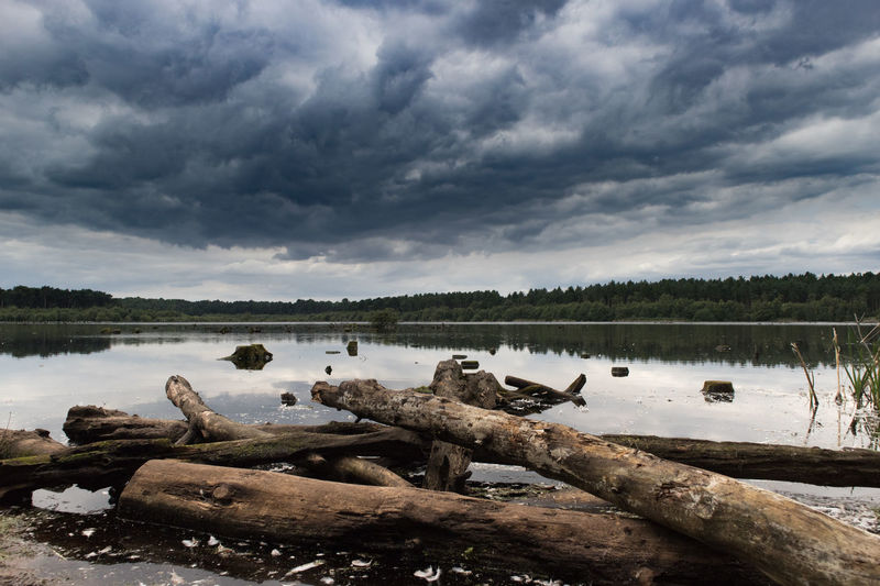 Logs and lake // Lake Cloud - Sky Water Landscape Nature Tranquility Sky Beauty In Nature No People Scenics Outdoors Day Low Tide Logs Wood Clouds And Sky Water Reflections Tree Area Low Angle View EyeEm Gallery Delamereforest Outdoor Photography Trees Nature Reflections