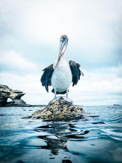 Pelican on rock in sea against sky