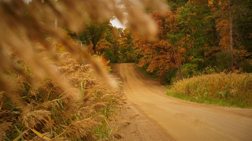 Autumn Autumn Colors Grass Autumn Beauty In Nature Curve Day Dirt Road Forest Growth Landscape Nature No People Outdoors Plant Road Scenics The Way Forward Tranquility Tree