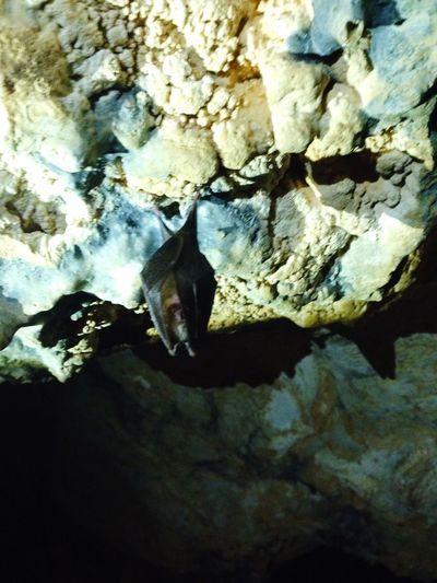Yarasa Gece Kuşu Mağara