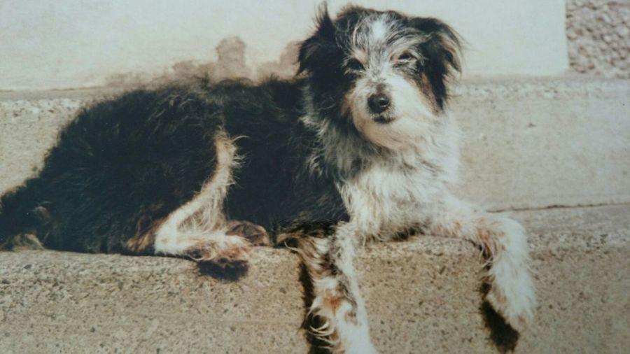 gone but not forgotten Dog Lover