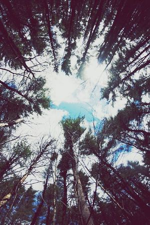 O que ilumina meus dias!! Nature Paz ✌ Maenatureza