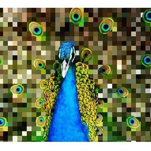 Pixlr Pixelated