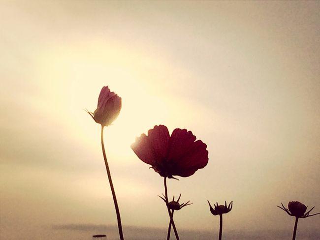 コスモス?✨ Flowers Tadaa Community Tadaa なばなの里