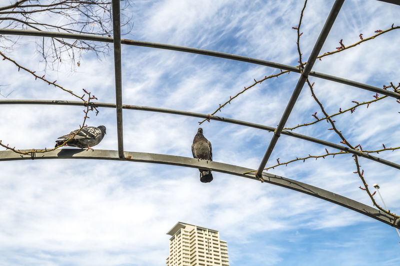 Low angle view of pigeon perching on metal structure