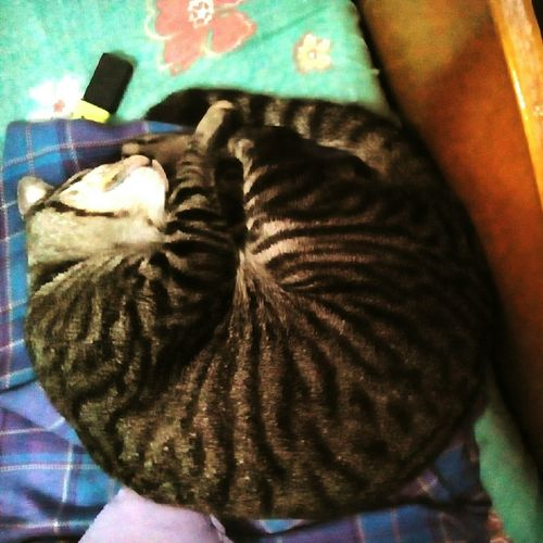 Cat on a roll. ??