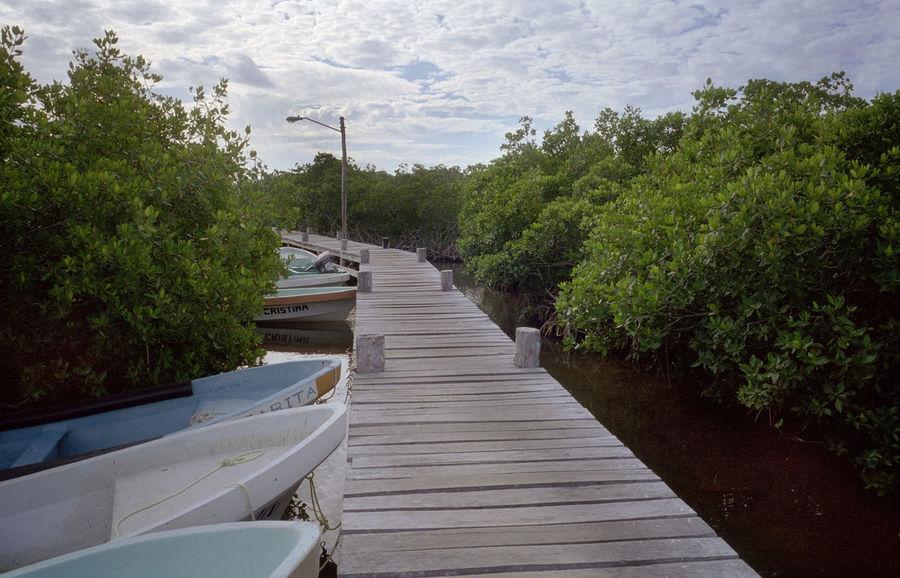 grain: boardwalk bridge through mangroves, mexico Boardwalk Bridge Fishing Lamp Post Mangroves Mexico Nature No People Plant Plants Quintana Roo Tree