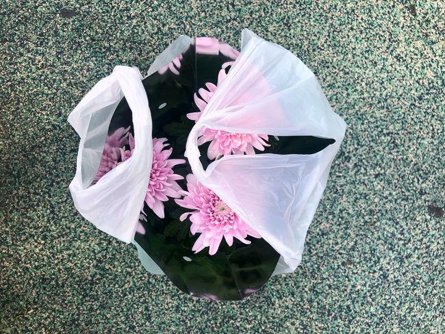 Plastic Bag Plant High Angle View Nature Flower Flowering Plant Close-up Beauty In Nature No People Pink Color