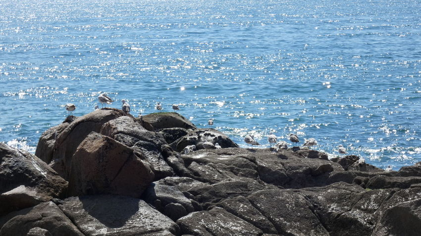 Life of seagulls. Nature Ocean View Beach Beauty In Nature Day Horizon Horizon Over Water Land Marine Motion Nature No People Ocean Outdoors Rock Rock - Object Scenery Scenics - Nature Sea Seagull Solid Sunlight Tranquility Water Wave