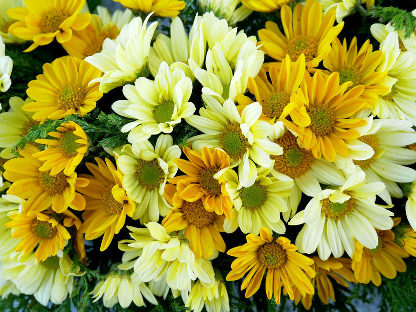 Flower bouquet. Flower arrangements in yellow tone. Bouquet Flower Flower Arrangement Flower Head Flowering Plant Fragility Freshness Growth Inflorescence Nature Petal Plant Pollen Vulnerability  Yellow